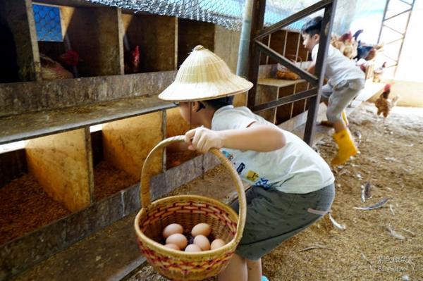台中住宿▋初心旅行農莊~ 讓孩子接觸大自然、感受昔日農家養雞、撿雞蛋的樂趣