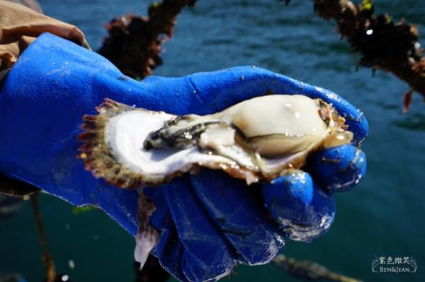 日本宮城縣~三陸海岸出海採牡蠣,感受食材新鮮好滋味