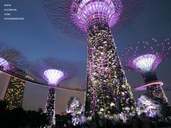 新加坡自由行大推一定要去超美超級樹【濱海灣花園Gardens by the Bay】