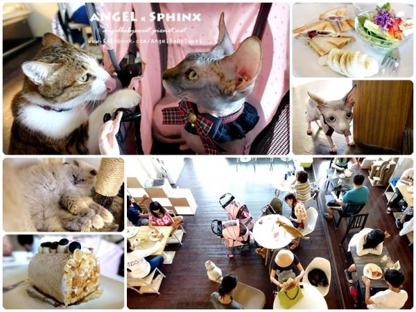 「貓店長」多貓貓做陪度過一個慵懶的午後  台中東海藝術街 traveler's tea