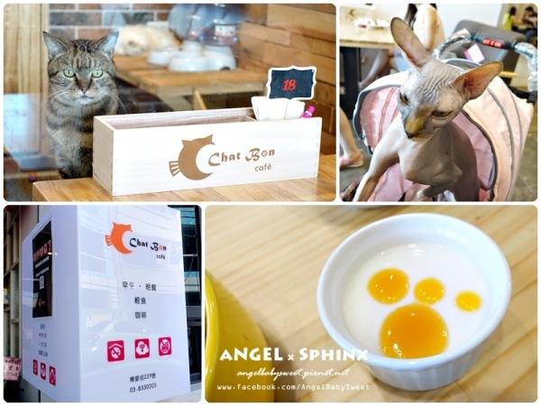 「貓餐廳」花蓮平價貓貓狗狗咖啡廳  Chat Bon Café' 貓棒棒咖啡
