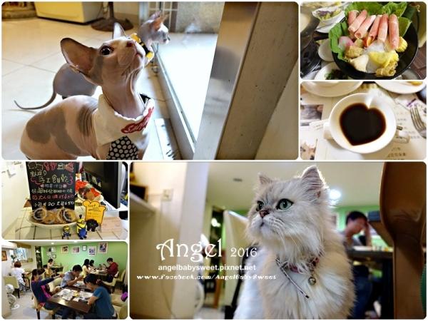 「貓店長」高雄苓雅  mona's cafe寵物咖啡館