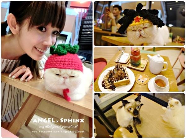 「曼谷貓餐廳5」精緻下午茶+多貓貓萌店長の療癒聖地  Cat Up Cafe