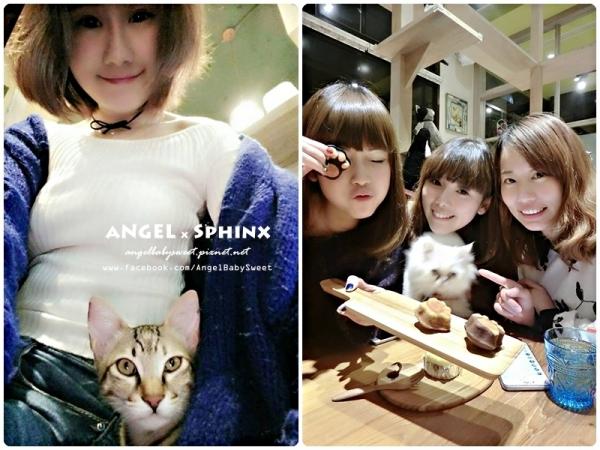 「貓店長」林口長庚  流連忘返不想離去的泰式創意料理多貓貓店,貓泰泰 Mao Thai Thai (二訪)