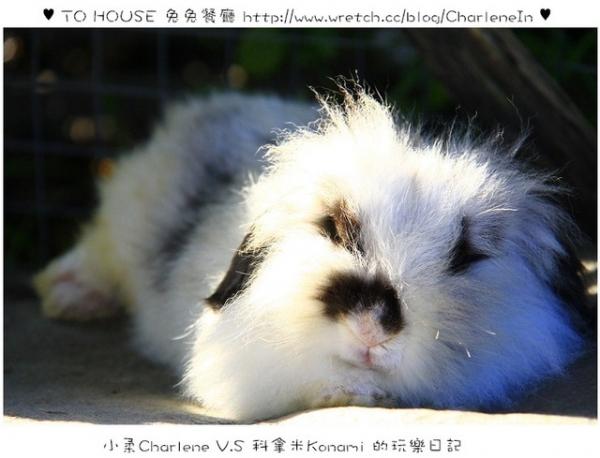 【新北八里】TO HOUSE 兔兔餐廳-八里好好玩 可愛小兔陪你用餐 ~