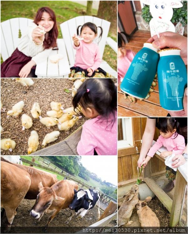 【苗栗通霄】飛牛牧場~餵小動物、擠牛奶、踏青、烤肉、露營親子旅遊好去處!