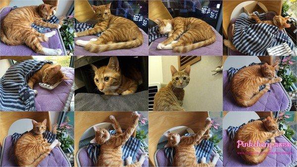 CAT K.jpg