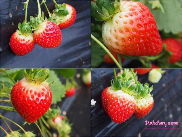 strawberryphoto.jpg