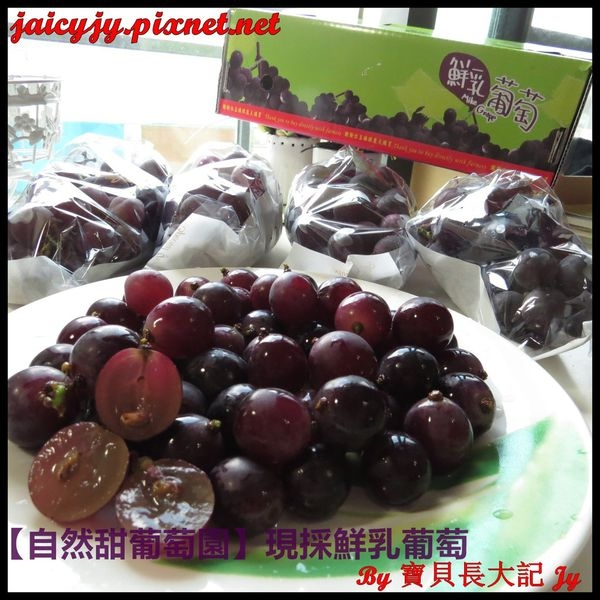 紫色鑽石來囉!【自然甜葡萄園】現採鮮乳葡萄