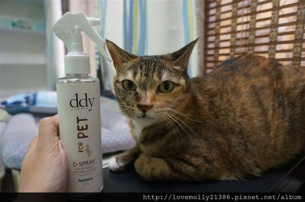 (寵物)我家喵星人的洗澡時間到!::ddy 寵物純植物精華淨膚精華::