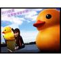【遊記】鴨鴨就是要在池塘裡黃色小鴨相見歡 * 2013桃園地景廣場藝術節