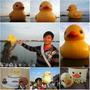 『桃園。新屋』呱呱呱黃色小鴨鴨來了─桃園地景藝術節