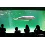 ▋日本中部地方▋三重.鳥羽水族館~來看鎮館之寶美人魚吧