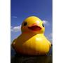 【AZ專欄@】趕鴨子上架的桃園黃色小鴨;是它療癒了大家,還是需要被療癒呢?