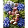 Pierre Herme les Jardins 2014♥吃起來口味好微妙♥Macaron Jardin d'Iris – février ♥♥♥
