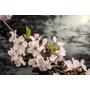【桃園復興】粉紅色的世界,樹下櫻吹如雪的浪漫.恩愛農場(3/1花況)