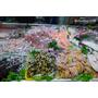 【桃園】想吃海鮮不必跑很遠.竹圍漁港