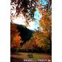 【新竹】冬季賞楓。不用坐飛機出國也有國外般的美景 ღ美樹營地
