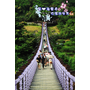 【台北】龍骨造型吊橋。偶像劇來此拍攝ღ白石湖吊橋