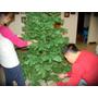 組裝2010年的家中聖誕樹