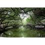【台南】台版的亞馬遜河.台江國家公園(台江生態文化園區)