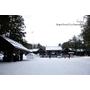 【北海道札幌】日本新年的神宮 分外的熱鬧.北海道神宮