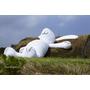 ╠桃園。遊記╣2014地景藝術節,今年來去找霍夫曼月兔渡中秋佳節!!超療癒!