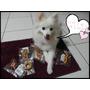 【毛孩子】momo購物網//每一秒都是與狗狗的幸福時刻