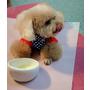 樂樂購-健康飲品 照顧狗狗的好法寶!