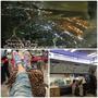 【旅遊】日本東京自由行6日遊,吃喝玩樂景點參考!(上篇)
