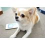 專屬網路寵物生活圈 ♥ 想帶寶貝去哪?打開【寵物生活圈】APP,資訊通通幫你找出來
