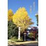 【東京‧景點】古根千散策_根津神社 秋意正濃時途中之旅