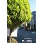 東京新興景點.文青最愛的旅遊路線,體驗下町風情_谷中銀座商店街(日暮里)