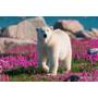 這麼可愛絕對要好好愛護牠!萌翻天的花田北極熊