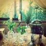 魔法飲料--檸檬香橙鼠尾草迷迭香冰紅茶