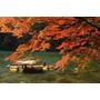 最浪漫的季節來臨!日本最強秋季美景!