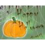 【013】2015 Halloween 南瓜來啦!
