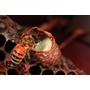 換季就一定要''蜂''保養啊~