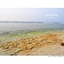 【小琉球 Liuchiu】多仔坪 跟著民宿老闆探索小琉球潮間帶 夜遊觀察夜間生態