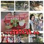 [奈良]KINTETSU RAIL PASS一日券遊奈良+京都,散步旅策♡從大阪出發吧!