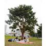 帶著Aaron BB去玩耍♥Go Wild加大野餐墊 恐龍愛野餐+經典紅白格♥野餐初體驗大成功 (≧∀≦)