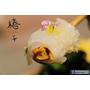 【羽諾食記】椿子日式料亭❤安和路預約制日本料理❤新鮮頂級漁獲-無菜單創意料理❤捷運信義安和站美食