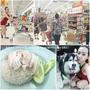 【旅遊】泰國曼谷自由行『水門市場、吃海南雞飯、逛Big C』逛到腳快斷。(送禮)