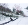 [新竹] 露營露到下雪啦~五峰觀雲亭變身銀白世界☃