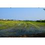 2016年屏東彩稻生活節,運用在地食材,總鋪師料理食物在地好味道!