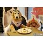 【羽諾食記】『耐吉斯無穀樂活 毛小孩同樂會』❤天然無穀寵物乾糧推薦