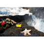 Kodak PIXPRO SP360 4K全景VR攝影機 震撼登場