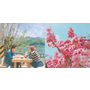 禪連韓國排行榜45週!讓韓妞身處夢幻粉紅世界的超美濾鏡APP!