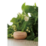 來自法國,有機認證精油 The Healing Power of Nature 璀莉緹 La Trinite Naturelle新品牌上市