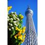 【日本,東京】東京晴空塔TOKYO SKYTREE 四周年生日快樂;東京地標不是要不要去的問題,而是要挑甚麼時候去。